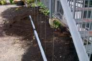 Cable trellis for vines
